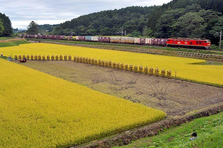 貨物列車 鶴ヶ坂-津軽新城