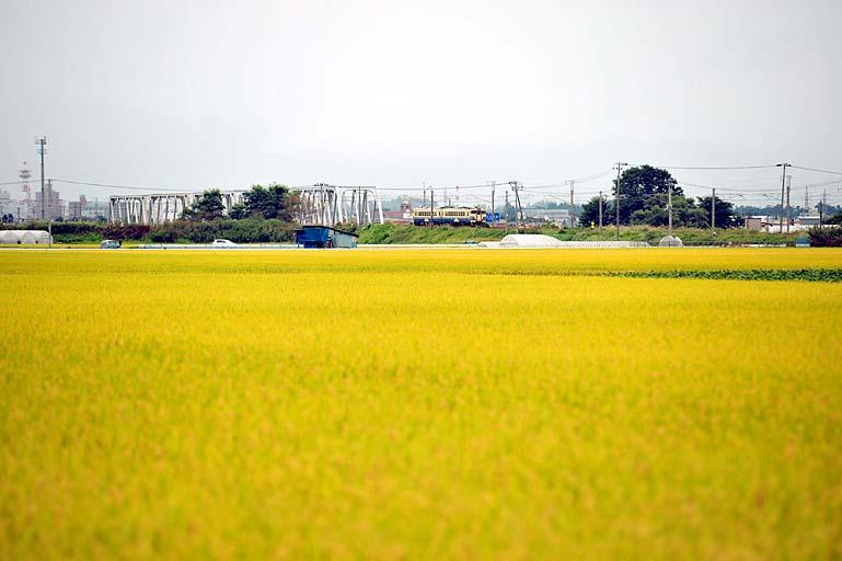 662D 撫牛子-川部